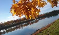 harbor-leaves