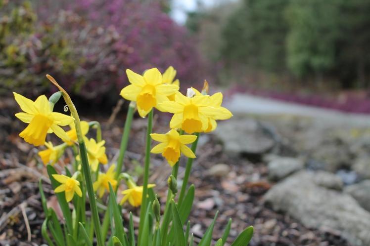spring close-ups (18).JPG